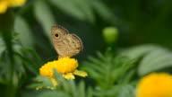 Schmetterling auf Blume (HD.