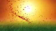 Farfalla in erba