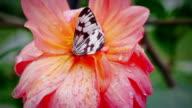 Schmetterling, Blume, Zeitlupe