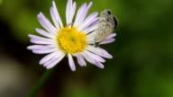 butterfly work