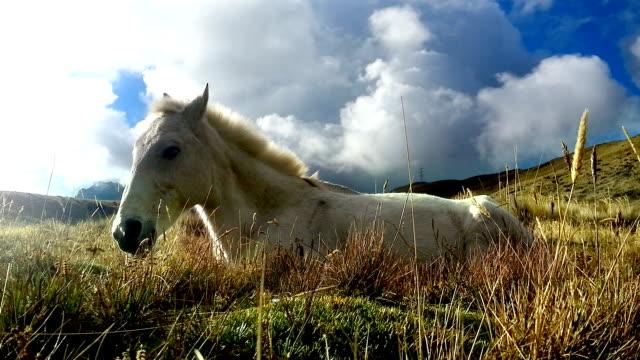 caballo blanco descansando en el pichincha ecuador 3