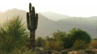 Cacti slow zoom