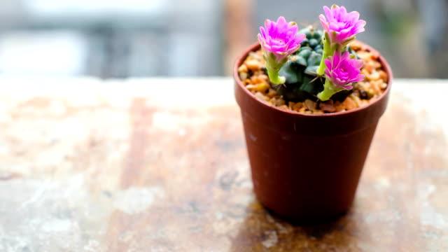 cactus flower timelapse