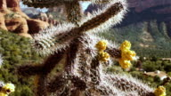 CU TU Cactus tree against background of Sedona red rock mountains / Sedona, Arizona, USA