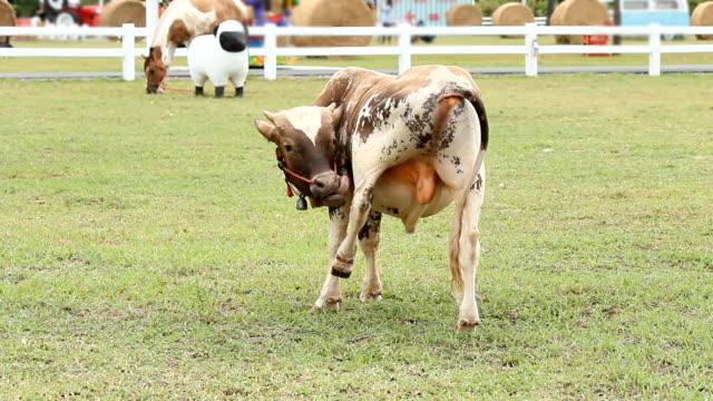 Calf in the field.