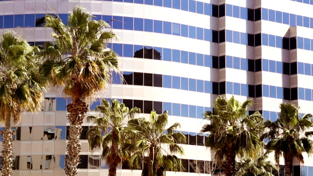 California Business office tower dwarfing palm trees swaying in the wind