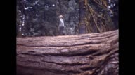 1947 California Redwoods Family Vacation