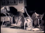 Cambridge University honours women who won degrees before 1948 LIB TX Woman and male student drawing animal skeletons MS Female student drawing ape...