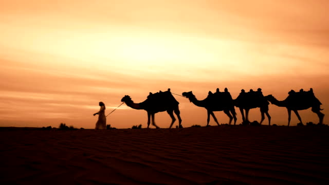 Camel herder in desert