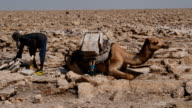 A camel is loaded with salt blocks mined by hand in the Danakil Depression on January 22 2017 in Dallol Ethiopia The depression lies 100 metres below...