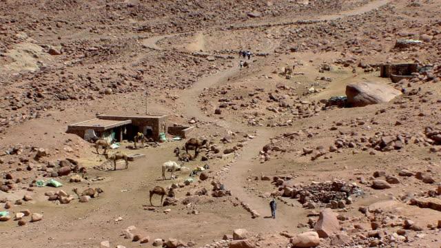 WS HA Camel stop at foot of Mount Sinai, Egypt