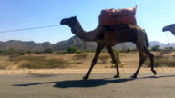 Camels are used to transport salt blocks mined by hand in the Danakil Depression on January 22 2017 in Dallol Ethiopia The depression lies 100 metres...