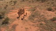 Camels Filmed from above - Australia 02