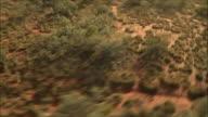 Camels filmed from above - Australia