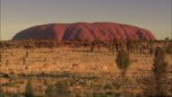 Camels in the Australian Desert