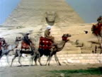 Camels walking by the Sphynx