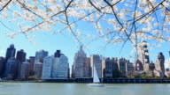 Camera captures cherry blossoms and a white yacht on East river in front of Manhattan from Roosevelt Island.