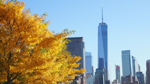 Camera captures One World Trade Center and other skyscraper behind autumnal leaves trees.
