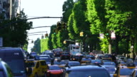 Camera captures the Central Park West traffic and people along rows of fresh green trees an evening at Central Park New York.