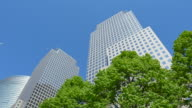 TD Camera captures World Financial Center Buildings behind fresh green trees.