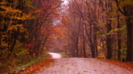 Camera pans across winding dirt road in forest of Fall colored trees, as leaves flutter to the ground.