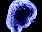 Camera tracks around various sections of human brain