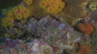 Camouflaged fish in coral reef