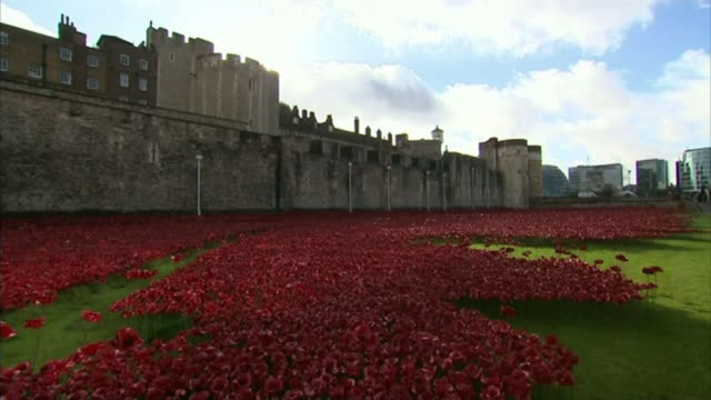 Campaign to find people who bought Tower of London poppies 2014 Tower of London Tower of London poppy art installation
