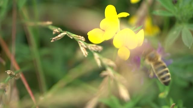 Campaigners cry foul over government nature plan delays T04081615 / TX Cambridgeshire Bee on wildflower Wildflower meadow