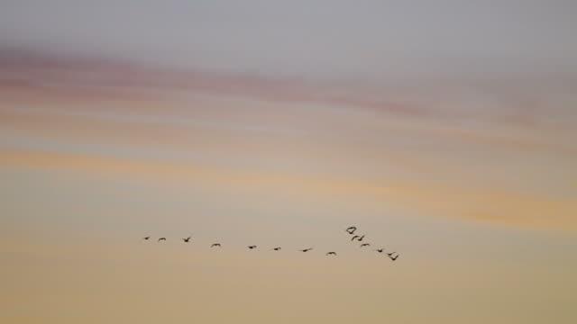 Oche del Canada in formazione contro alba cielo