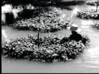1948 B/W MONTAGE Canals in Bango. Woman picks water cress. Man poles sampan boat / Bango, Thailand