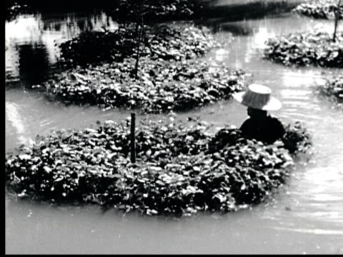 1948 B/W MONTAGE Canals in Bango. Woman picks water cress. Man poles sampan boat / Bango, Thailand