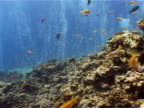 Canyon' dive site near Dahab, Red Sea, colourful fish swimming around coral, bubble curtain in background