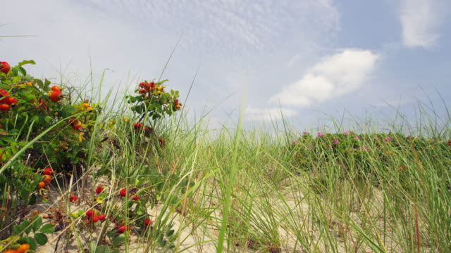 cape cod national sea shore beach with surf and sky and dunes and dune grass