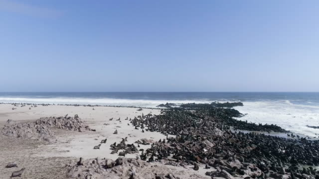 Cape Cross. Sälar koloni