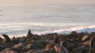 Cape fur seals (Arctocephalus pusillus) on beach at sea edge, Cape Cross, Namibia