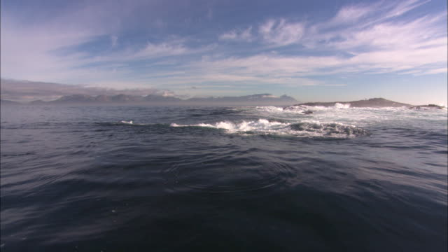 Cape Fur Seals, Seal Island, Simonstown, South Africa