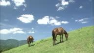 Cape Toi And Cape Ponies In Kushima, Miyazaki