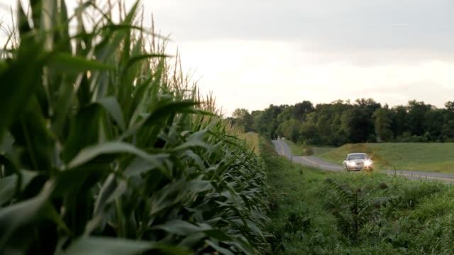 Car by corn field