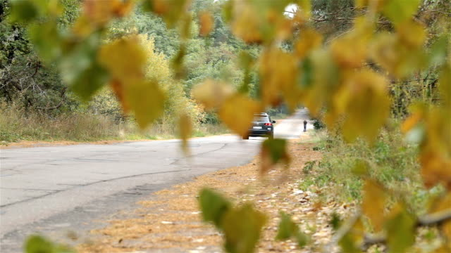Car drives through the forest road.