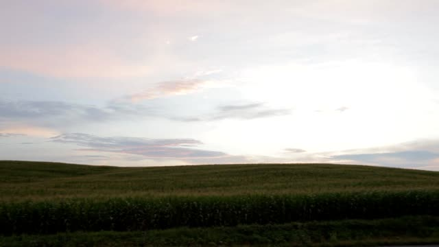 Car driving by cornfield