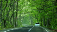 Car driving on green forest road