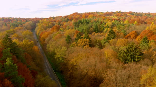 AERIAL Car driving through a forest in fall