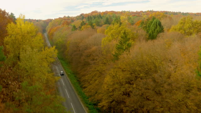 AERIAL Car driving through beautiful mixed forest in autumn