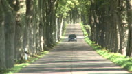 WS Car moving on tree lined path avenue / Krummin/Usedom,  Mecklenburg Western Pomerania, Germany