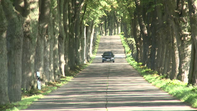 WS Car moving on tree lined path avenue / Krummin/Usedom,  Mecklenburg Western Pomerania, Germany