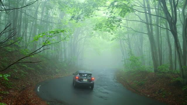 Auto auf der Straße durch den Wald im Nebel.