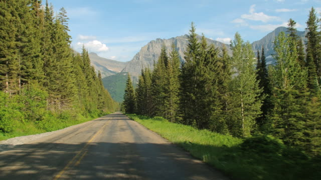 Car POV past tall evergreens on Glacier National Park's Going-to-the-Sun Road.