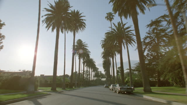 Car point of view driving down palm tree-lined street with houses on either side / Beverly Hills, Los Angeles