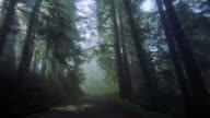 Car point of view driving on road through forest with sunlight shining through trees / Redwood National Park